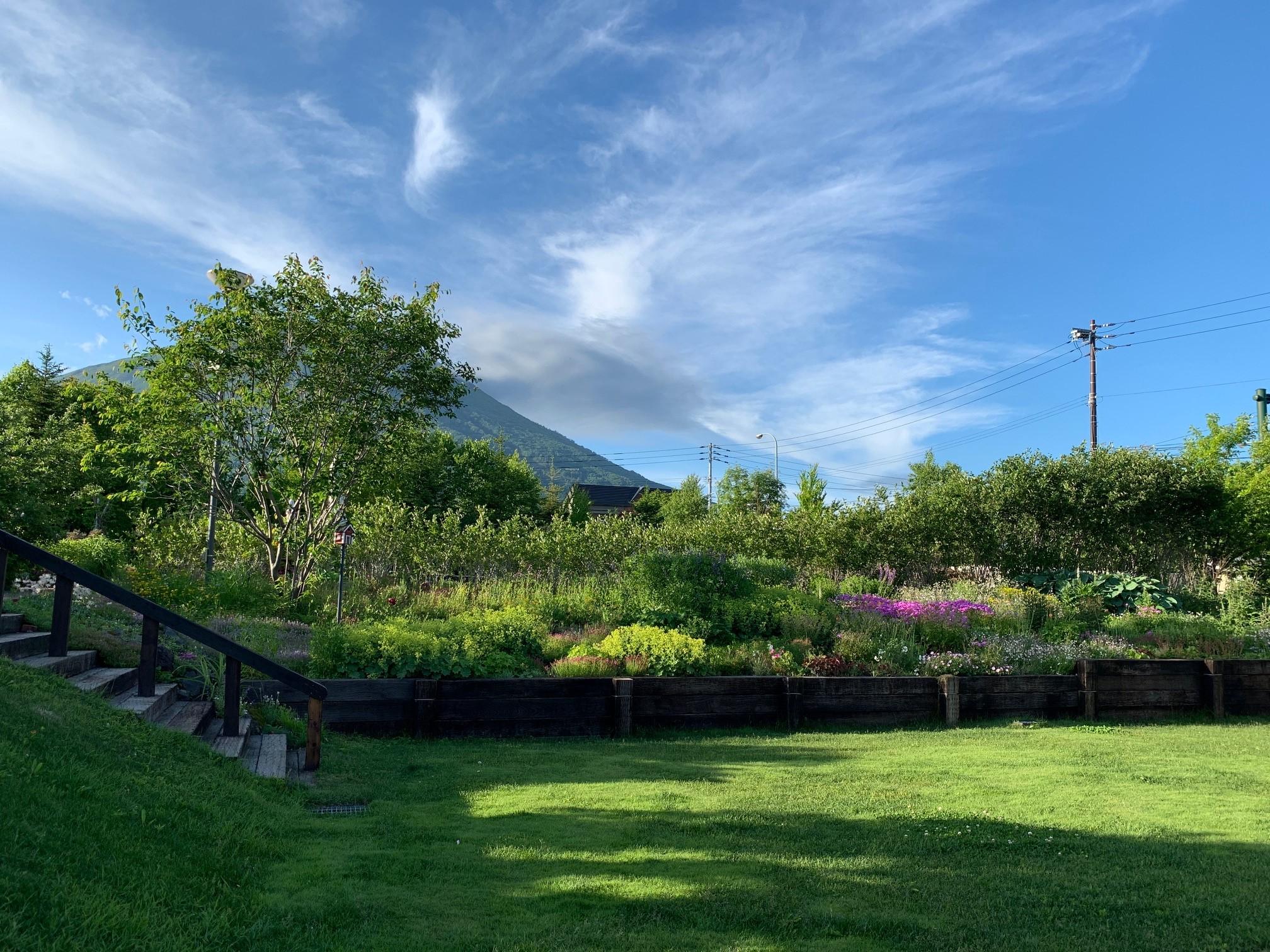 庭の写真2019年6月24日.jpg